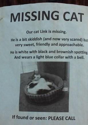 missing cat(563x800)