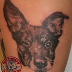 Stitchpit dog portrait
