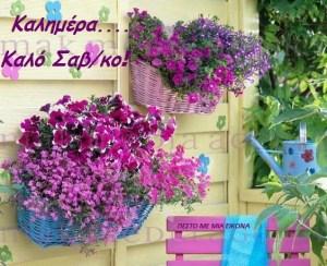 Read more about the article Όμορφη γλυκιά καλημέρα σε όλους!Καλό σας Σαβ/κο!