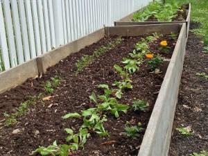 raised garden bed at st james church