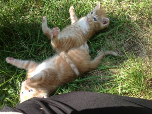 Vince and Issy are playful little buddies.