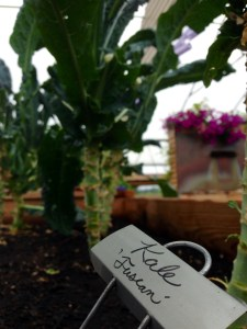 The Farm's tuscan kale serves as a nutritious addition to salads and smoothies.