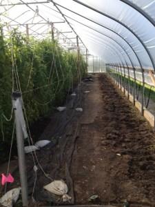 No more tomato plants!
