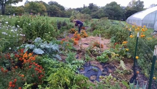 community garden 3-30-2020