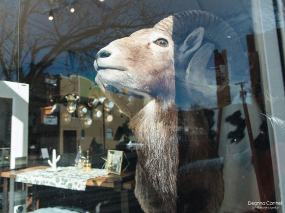 Therapy Stores window display with stuffed ram