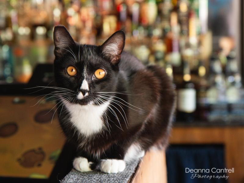 Blue-Bird-Tavern-cat