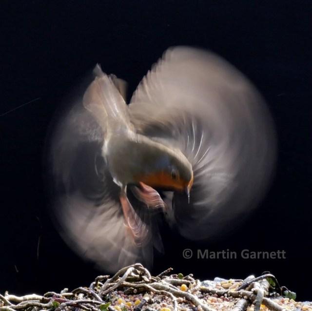 photograph copyright Martin Garnett