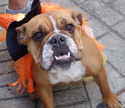Berta smiles for the camera at the Dog Parade.