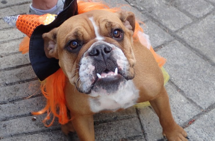 Berta smiles for the camera at the Dog Parade.