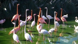 Bird Park Outing Year 2.2 - November 2015 056
