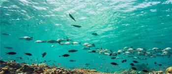 fish id 350x150