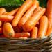 Carrots Cells