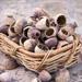 Poppy Seed Skin Care