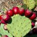 Prickly Pear Skin Care