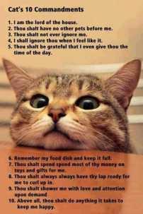 Cats-10-Commandments-Inspirational-Life-Quotes