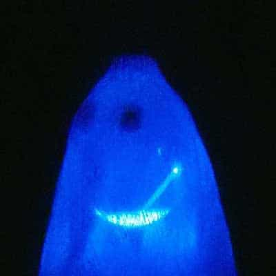 Glowing Ghost Craft for Kids