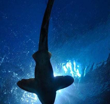 Shark Week strikes in St. Louis