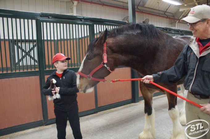 Warm Springs Ranch: Clydesdale Heaven