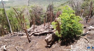 The pictures show deforestation and indiscriminate dumping of solid waste at the Grande Anse Esate. (photo Lyndon John)