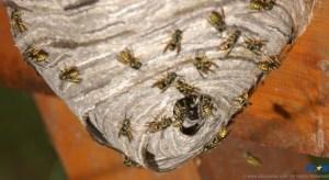 Who poked the hornet's nest?