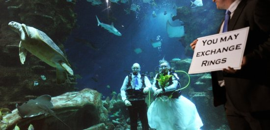 Under water weddings in the Bahamas