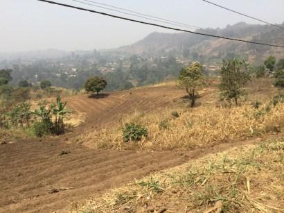 Blog 4 crops 1