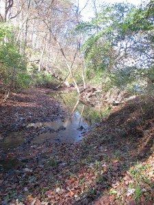 Fall Retreat 2015 Woods_