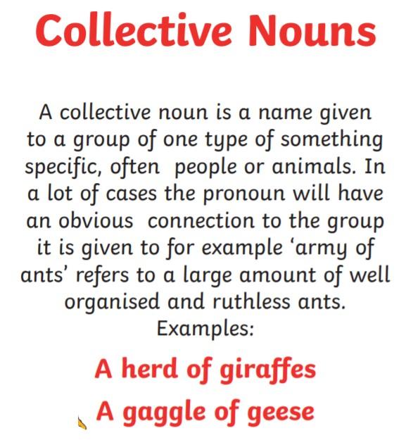 nouns4