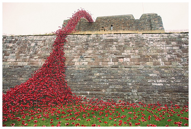 Poppies Tour