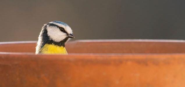 Big Garden Bird Watch