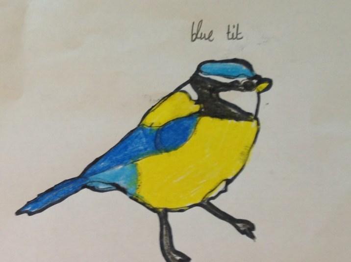 blue tit 4