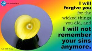 Picture of a yellow calla lily for the daily Bible study Hebrews 8:12