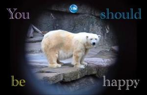 Picture of polar bear for the spiritual nutrition page