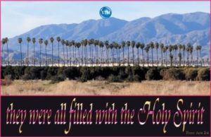 Picture of palm trees in the desert for the born again bs