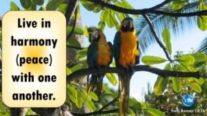 Picture of a pair of macaws for the harmony bible study Romans 12:16