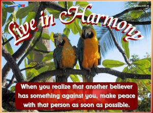 picture for harmony - parrots at waikiki
