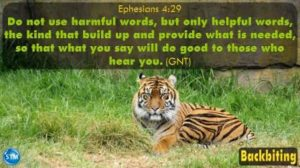 Picture of tiger in zoo for the backbiting bible study Ephesians 4:29
