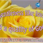 Picture of a yellow rose for the gentleness bible study