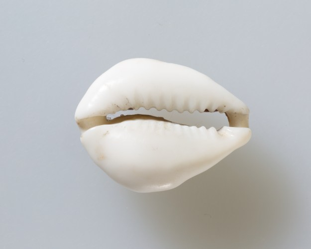 Cowrie Shell | 332-30 BC | Courtesy of the Metropolitan Museum