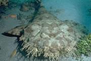 webgong