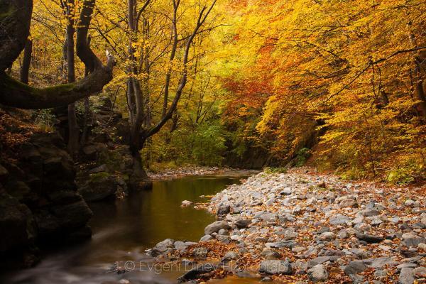 Есен на Стара река - Фотобанка