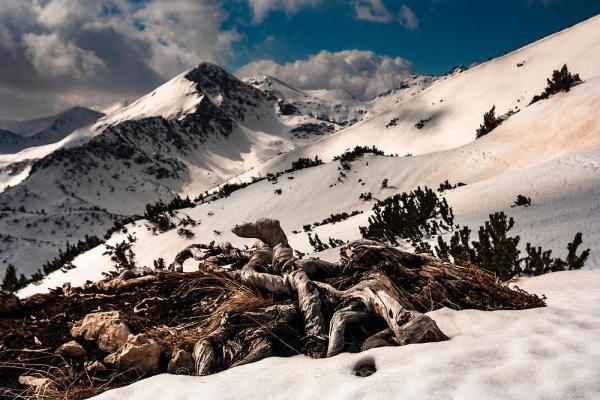 Пирински снежен пейзаж - Фотобанка