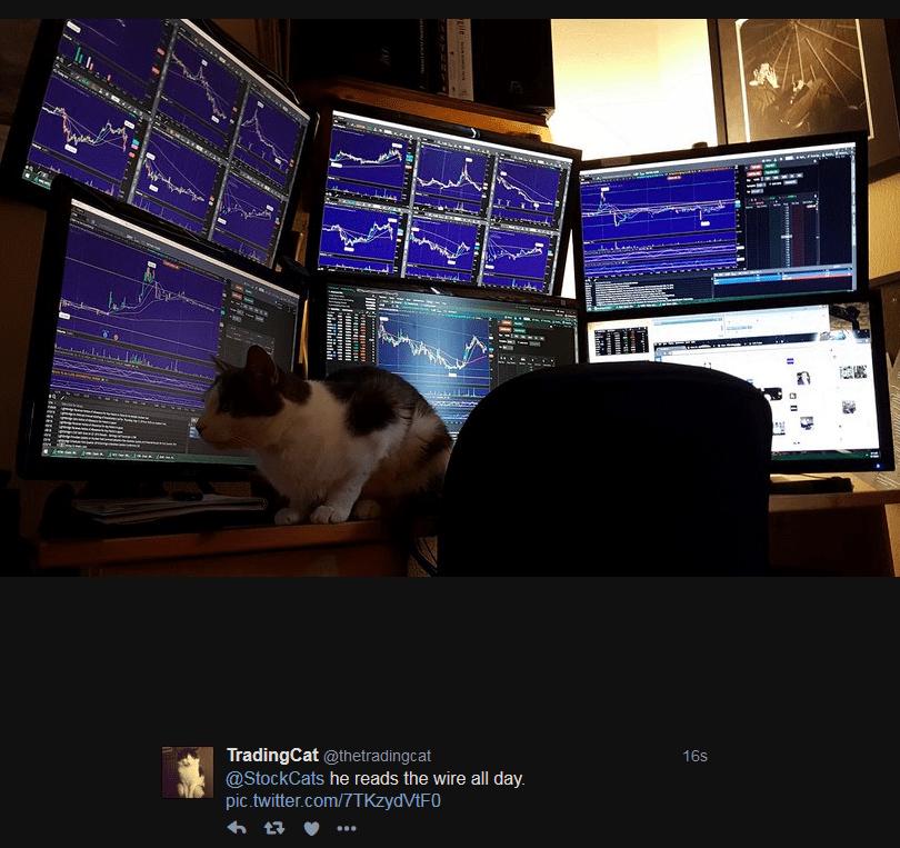 TradingCat