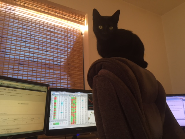 stockcat-on-chair