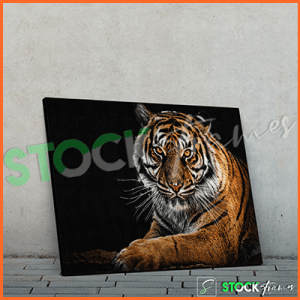 Canvas Prints Single Panels (Wild Animals) – 18×24 etc.