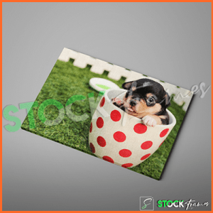Canvas Prints Single Panels (Puppy) – 18×24 etc.