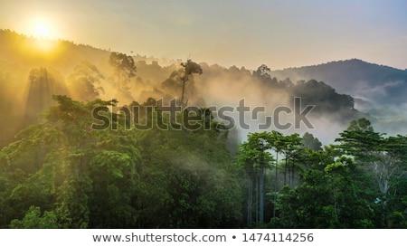 Kaeng Krachan National Park Thailand
