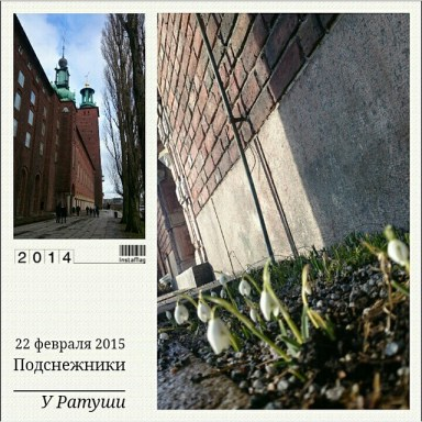 подснежники у городской Ратуши в Стокгольме