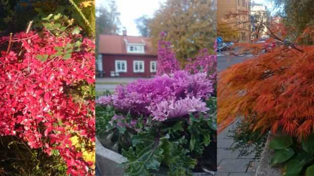Красочная осень 2015 в Стокгольме