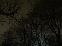 Träden sträcker sig upp mot den dystra natthimlen